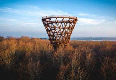 360-Grad-Panorama über den Baumwipfeln: